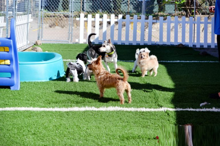 The Many Benefits of a Dog Boarding Facility.